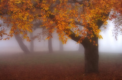 The Magical Tree (BarneyF) Tags: park orange mist color tree liverpool landscape autum sefton aplusphoto