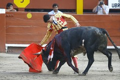 toros (4)