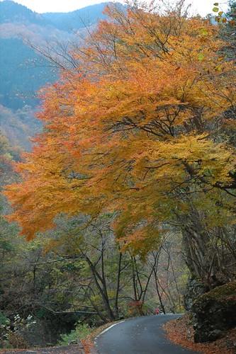 un camino colorado