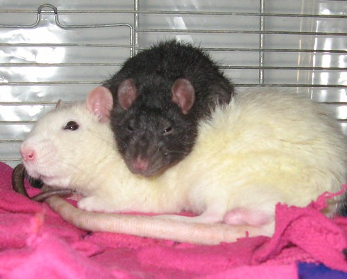 Jonny Råtten och Skarv myser