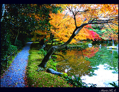 Autumn Road to Winter (Marie Eve K.A. (away..)) Tags: road travel blue autumn winter red orange plants color colour reflection tree green fall nature beautiful beauty leaves yellow japan way landscape temple gold japanesegarden golden pond scenery kyoto path autumnleaves foliage   gr     ricoh breathtaking kinkakujitemple tints         templeofthegoldenpavilion favoritegarden colourcolorful  picturesofjapanlandscape