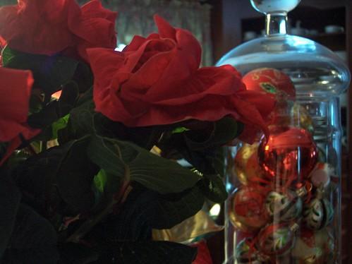rose poinsettia 5