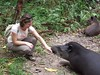 Tapir licking my hand