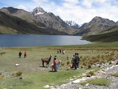 Laguna Querococha (javi270270) Tags: ice peru llama lagoon pico andes laguna montaa hielo ancash callejondehuaylas 3980 soroche