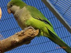 nature parrots