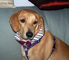 Sophie_122507_scarf