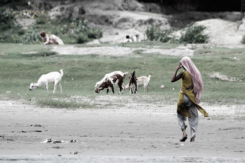 印度。歸途