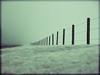 winter fence (Micah Taylor) Tags: winter field vanishingpoint post ground explore photoblog fense 359 tc111