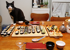 Waiting for sushi (Dr. Hemmert) Tags: pet fish animal cat sushi japanese sweet shrimp artemis dinnertable