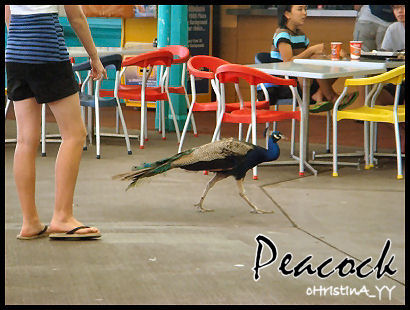 Food Hall: Peacock