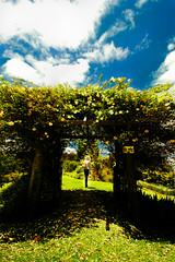 this way to wonderland (mela.de.gypsie) Tags: flowers summer plants green grass rose clouds garden gate alice farm magic dream surreal australia follow fantasy pip opening noon  wonderland herb faerie scent  thisway
