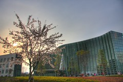 Spring Museum-National Art Center Tokyo (kurokojpn) Tags: japan cherry tokyo orlando blossoms hills   ark kuroko canon40d photosjapan kurokoshiroko kuroko01 kurokoshiroko photographytokyo photostokyo bestoftokyo tokyobest orlandojpn thetokyopost kurokojpn