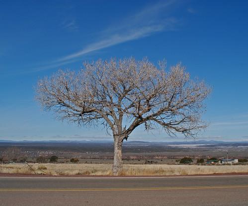 Taos Tree