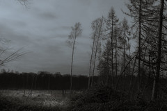 Grief (Netsrak (on/off)) Tags: forest woods wald forst baum bäume tree trees eifel natur nature winter