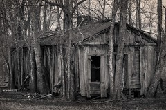 House in the Trees B&W (sir_quasar) Tags: abaondoned house abandonedhouse tree trees roof doorway window nikon d750