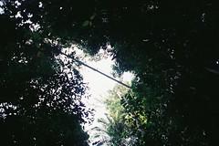 Looking up at the world's longest canopy walkway (Liyin Yeo of Liyin Creative Studio) Tags: trees studio design nationalpark rainforest creative wideangle ishootfilm walkway malaysia canopy pahang tamannegara kualatahan expiredfilm liyin ultrawideangle nikonf601 nikkor20mmf28af samsung400 httpwwwflickrcompeopleliyin liyinphotography liyindesign httpliyindesignwordpresscom liyinillustration liyincartooncaricature liyincreativeprofessional liyindesigner liyingraphicdesignmalaysia liyintraveler liyincreative liyincreativecom designerinmalaysia lukisholic liyin yeo lukisholic liyincreativecom wwwliyincreativecom