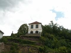 Weinberg bei Diesbar Seuslitz - Sächsische Weinwanderweg
