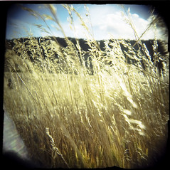 Holga grass