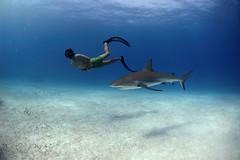 Stewart Free Diving