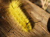 nfld18 lookout caterpillar.jpg