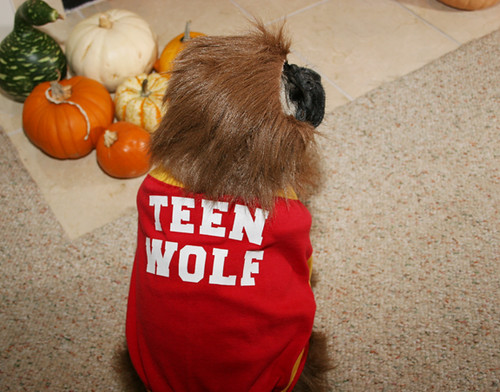 Teen Wolf, back