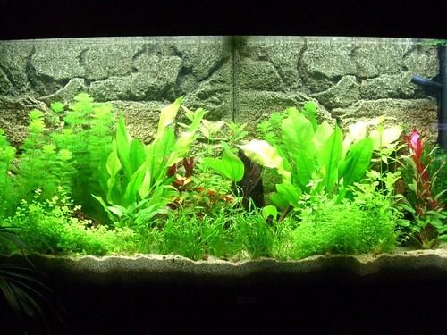 Aquarien Beleuchtung Und Heizung Waren Des TäGlichen Bedarfs Fische & Aquarien Aquarium Juwel Vision 180 Mit Eheim Außenfilter