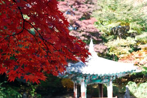 Aeryeonjeong Pavilion, Changdeokgung Palace