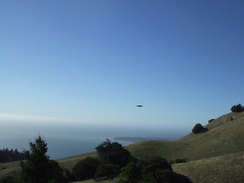 crow flying over Mt