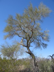 IMG_1996 (jrdnz) Tags: arizona tucson saguaronationalpark