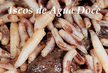 iscos agua doce