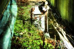 365:121 .. Reflective Christmas (fwumpbungle (broomephoto)) Tags: selfportrait reflection puddle 365 hdr day121 3xp 365days canoneos400drebelxti fwumpbungle