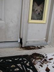 Front Door Jamb Rot