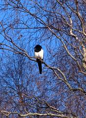 dsc_1865cr.jpg (Ade Bradshaw) Tags: jan 2008 suttonpark