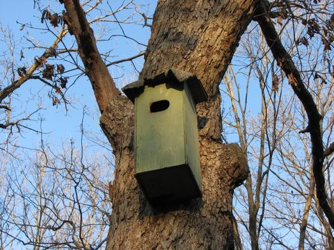 box for barn owls Lone Elk Park