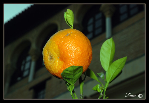 Naranja pocha