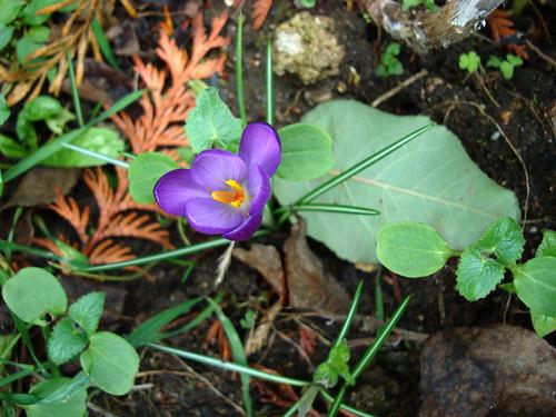debut printemps 2008 ds mon jardin (5)