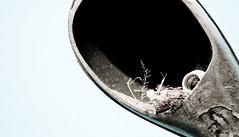 Bird's nest in a light pole