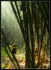 A visit to the Neverland [..Chuadanga, Bangladesh..] (Catch the dream) Tags: trees light people sun sunlight nature forest garden children warm child bongo warmth bamboo beam plantation bengal bangladesh bangla bengali bangladeshi bangali chuadanga catchthedream gettyimagesbangladeshq2