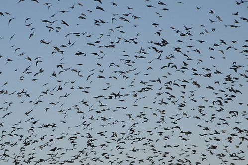 birds_0748 web