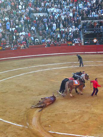 dead-bull-Valencia