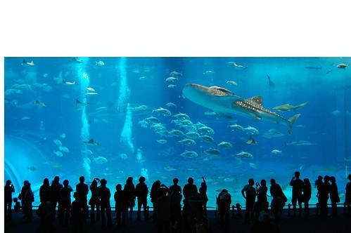 más grande del mundo Tiburón Ballena