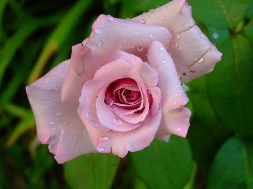 garden 5-21-08 007