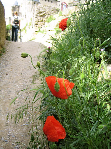 Carcassonne: trail just inside the walls
