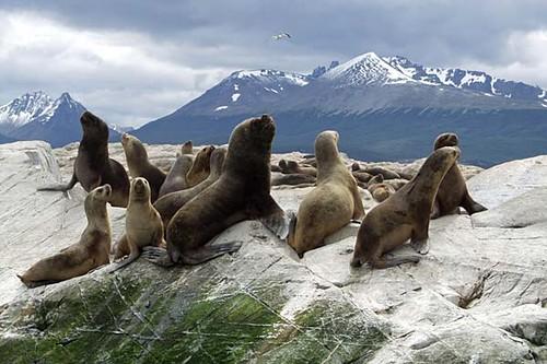 ushuaia - viajar a argentina