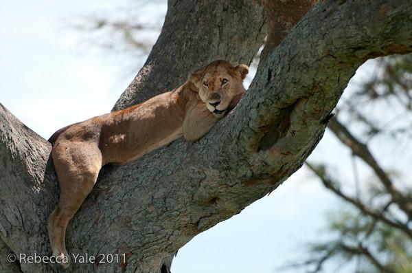 RYALE_Rwanda_Uganda_Safari-308