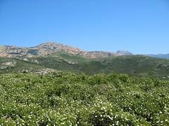 Sur le sentier d'Urchinu : vers Monte Ravu à gauche et Capu d'Ortu à droite