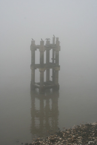 Cormorants Warming in the Fog