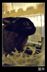 NATURA0006 () Tags: rabbit