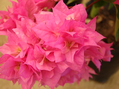 Bouquet (TheaRomitiphotos) Tags: flowers flores primavera fleurs bouquet fiori masterphotos