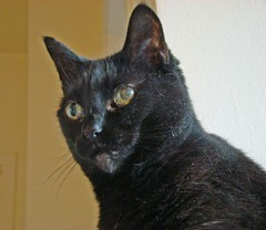 Keep the food bowl full & Litter box empty-got it? (sniderscion) Tags: portrait pet black cute cat scott lucy eyes sony stare purr meow instructions pussycat familiar snider bestofcats dsch7 sonydsch7 doesyourcatrunyourlife whosreallyincharge sniderscion scottsnider